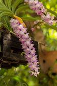 Botanical, botanique, bouquet, branche, vif, bourgeon, propre, fin-u — Photo