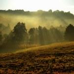 Autumn morning — Stock Photo