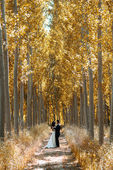 Just married couple in poplar background — Stockfoto