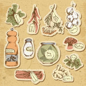Set of spices and herbs — Stock Vector