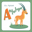 Letter A - Antelope — Stock Vector #45052123