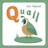 Letter Q - Quail — Stockvector