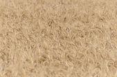 Wheat — Foto Stock