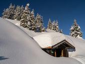 Árboles de Navidad en el Sonnennalm (Zell am See) — Foto de Stock