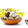 Quail eggs in bowl, isolated on white background. — Stock Photo