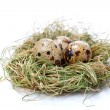 Quail eggs in nest, isolated on white background. — Stock Photo