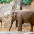 Big african elephant — Stock Photo