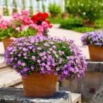 Landscaped flower garden — Stock Photo