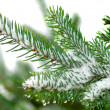 Photo: Christmas tree on white background
