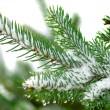 Christmas tree on white background — Stock Photo