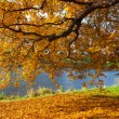 Stock Photo: Fall leaves trees