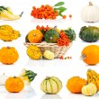 Set of autumn pumpkins, isolated on the white background - Stock Photo