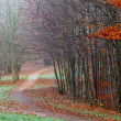 Pathway through autumn forest — Stock Photo #19445129