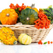 Autumn pumpkins in a straw basket, isolated on the white background — Stock Photo #19445577