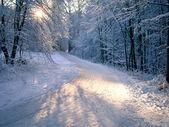 Kış alanında ağaç gölgesi — Stok fotoğraf
