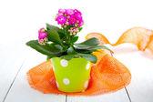 Kalanchoe Calandiva flowers in a green pot — Stock Photo