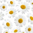 Chamomile flowers texture, on a white background — Stock Photo #20045841