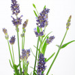 Stock Photo: Bunch of lavender on a white background