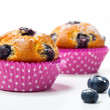 Blueberry muffins on white background — Stok fotoğraf