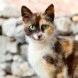 Cat with green eyes — Stock Photo #21255397