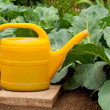 Royalty-Free Stock Photo: Yellow watering can in vegetable garden