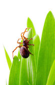 A brown spider on green grass — Stock Photo