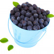 Fresh blueberry in a blue mug with leaves, over a white backgrou — Stock Photo #21592489