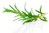 Twig of rosemary on a white background — Photo