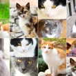 Assortment of cats - Stock Photo