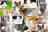 Assortment of cats — Stock Photo
