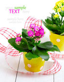 Kalanchoe bush in a green pot — Stock Photo