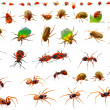 Insects : ladybug, may-bug, cockchafer, ant, spider, firebug and — Stock Photo