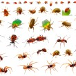 Insects : ladybug, may-bug, cockchafer, ant, spider, firebug and - Stock Photo