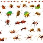 Insects : ladybug, may-bug, cockchafer, ant, spider, firebug and — Stock Photo #22696331