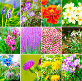 Assortment of spring flowers — Stock Photo