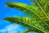 Mavi gök yeşil palmiye yaprağı — Stok fotoğraf