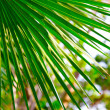 Green palm leaf — Stock Photo #22835468