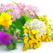 A bouquet of wildflowers - Stock Photo