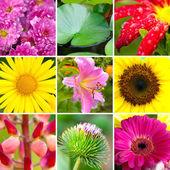 Yaz ürün yelpazesine çiçek — Stok fotoğraf