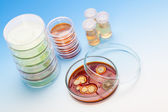 Petriho misky s koloniemi mikroorganismů — Stock fotografie
