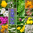Fresh medicinal aromatic, plant, flowers - collection set — Stock Photo