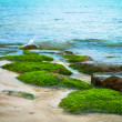 Algae on the sea - Stock Photo