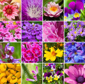 Collage from different kind of flowers — Stock Photo