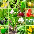 Vegetable garden collection — Stock Photo
