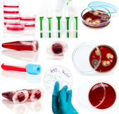 Set of laboratory supplies. Petri dish, Spectrophotometer quvett — Stock Photo