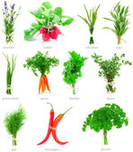Fresh herbs and vegetable collection isolated on white backgroun — Stock Photo