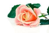Bella rosa arancia su bianco — Foto Stock