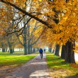 Stock Photo: Pedestriwalkway for exercise lined up with beautiful fall tre