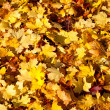 Watercolor Fall Leaves — Stock Photo