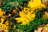 Autumn leaf on green grass — Стоковое фото